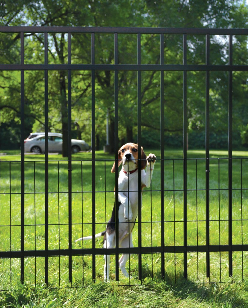 Dog Fence Solutions For All Types Of Neighborhoods