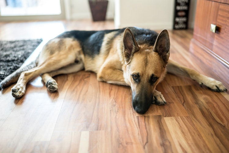 3 Qualities You Need Look for in a Pet-Friendly Home