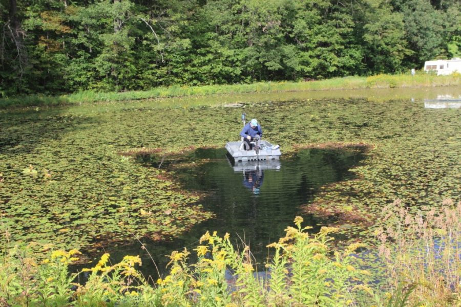 Rid Your Pond of Unwanted Weeds