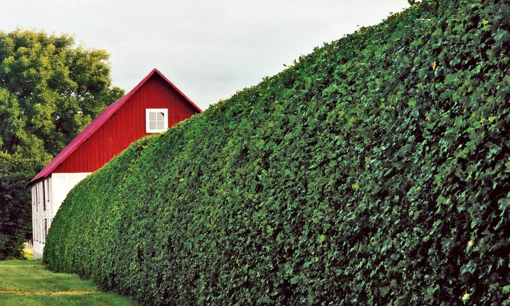 Hedges Are More Effective When They're Trimmed Consistently