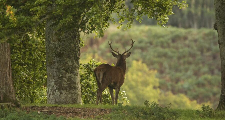 3 Hunting Tips for Beginners