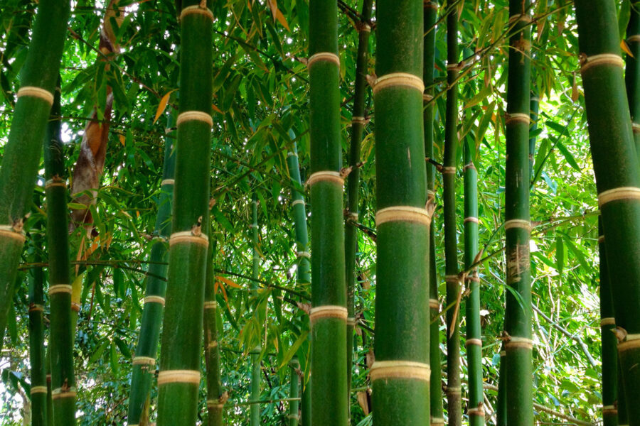 Bamboo poles- the source of innovation in the modern world