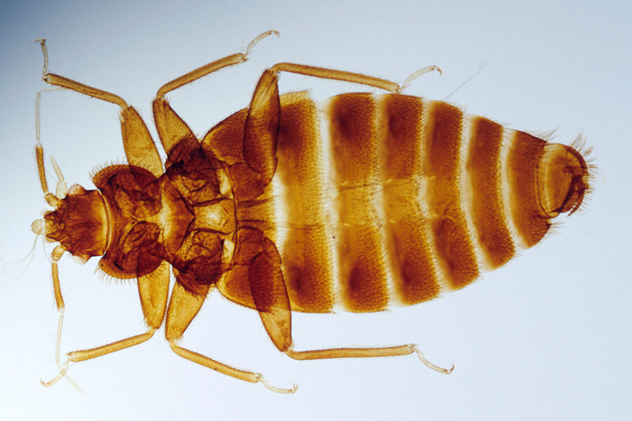 What are the Top Signs of Bed Bugs Infestation in a House?
